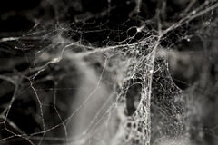 Spinnewebachtergrond stock afbeeldingen