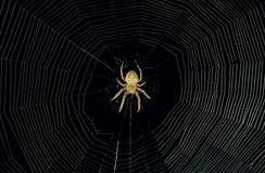 Spinnewebachtergrond bij nacht Stock Foto