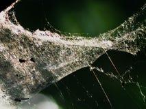 Spinnewebben op hoe dan ook gevaarlijke de schoonheid van de ontruimingsjager stock fotografie