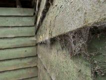 Spinnewebben op hout Royalty-vrije Stock Fotografie