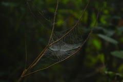 Spinnewebdetails en natuurlijke kleuren Stock Foto's