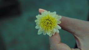 Spinning Dandelion flower at girl hands stock video