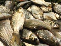 Spinning fishing Royalty Free Stock Image