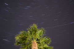 Spinning night around Palm tree Royalty Free Stock Images
