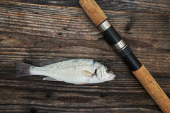 Spinning rod, reel and fish  Royalty Free Stock Photo