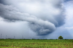 Spinning Storm Cloud Over Corn Field Royalty Free Stock Image