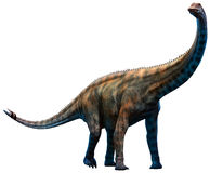 Spinophorosaurus. A large herbivore from the Jurassic era Stock Photography