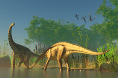 Spinophorosaurus in Swamp. Spinophorosaurus was one of the titanic dinosaurs that inhabited swamps of the Jurassic Era Royalty Free Stock Photos