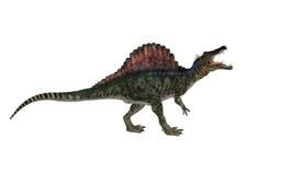 Spinosaurios隔绝了 免版税库存照片