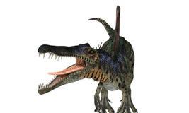 Spinosaurios隔绝了 库存照片