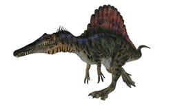 Spinosaurios isolerade royaltyfri illustrationer