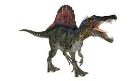 Spinosaurios isolerade Royaltyfri Fotografi