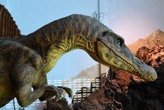 头Spinosaurus恐龙 库存图片