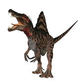 Spinosaurus 01. The Spinosaurus dinosaur was a huge carnivore of the Cretaceous Period of Earths history. It was larger then Tyrannosaurus Rex and Giganotosaurus Royalty Free Stock Images