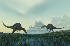 Spinosaurus. Two Spinosaurus dinosaurs drink from a marsh area in prehistoric times Stock Photography