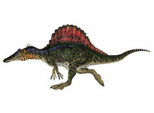 Spinosaurus Royalty Free Stock Photos