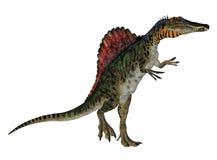 Spinosaurus Stock Photos