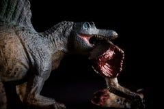Spinosaurus biting piece of a dinosaur body on dark. Background stock photography