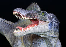 A Spinosaurus Dinosaur Close Up Against Black Stock Image