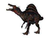 Spinosaurus dinosaur - 3d render Royalty Free Stock Images