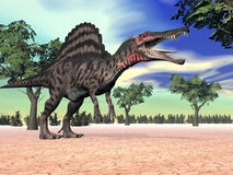 Spinosaurus dinosaur in the desert - 3D render Royalty Free Stock Image