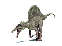 Spinosaurus dinosaur. Isolated on white, clipping path included. Royalty Free Stock Photography