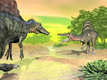 Spinosaurus dinosaurs fight - 3D render. Two spinosaurus dinosaurs fighting mouth open face to face in nature by colorful day Stock Photo