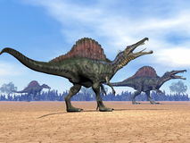 Spinosaurus dinosaurs walk - 3D render Stock Photos