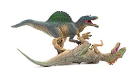 Spinosaurus fights with allosaurus on white background stock photos