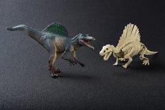Spinosaurus kościec na czerni i model Zdjęcia Royalty Free