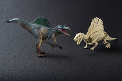 Spinosaurus model and skeleton on black Royalty Free Stock Photos