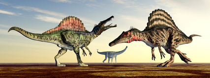 Spinosaurus and Puertasaurus Royalty Free Stock Photography