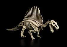 Spinosaurus skeleton on black Royalty Free Stock Photos