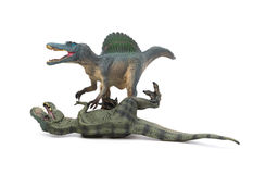 Spinosaurus stands and tyrannosaurus lays down on white background Stock Images