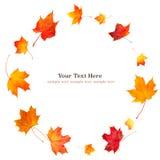 Spinowy okrąg naturalni jesieni pomarańcze liście Odizolowywający na białym tle dla sieć sztandaru z kopii przestrzenią dla Twój  zdjęcia royalty free