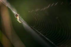 Spinsilhouet op een Web stock afbeeldingen