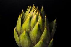 Spiny artichikes of Sardegna Italy. On black background royalty free stock photo