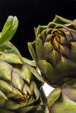 Spiny artichikes of Sardegna Italy. On black background stock photos