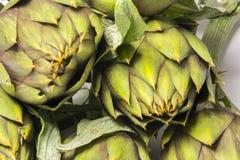 Spiny artichokes of Sardegna. Healthy Italian organic agriculture royalty free stock photos
