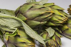 Spiny artichokes of Sardegna. Healthy Italian organic agriculture royalty free stock images