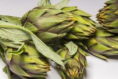 Spiny artichokes of Sardegna. Healthy Italian organic agriculture stock photos