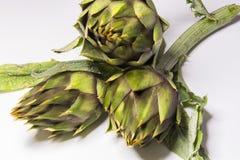 Spiny artichokes of Sardegna. Healthy Italian organic agriculture royalty free stock image