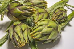 Spiny artichokes of Sardegna. Healthy Italian organic agriculture royalty free stock photography