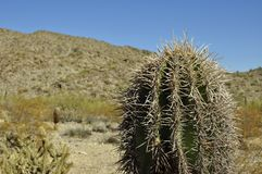 Spiny Cactus. Against an arid mountain rainge in background vector illustration