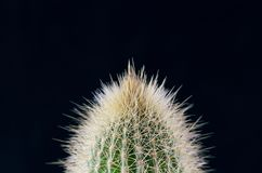 Spiny Cactus close-up for background or wallpape. R with variations of color Royalty Free Stock Image