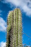 Spiny cactus growing on Aruba Stock Photo