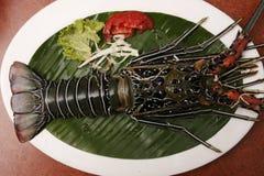 Spiny Lobster from Goa, India Stock Photos