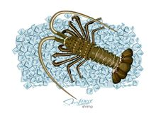 Spiny lobster on ice cubes in cartoon style. Fresh spiny lobster. Seafood product design. Inhabitant wildlife of. Spiny lobster on ice cubes in cartoon style Royalty Free Stock Images