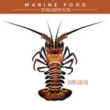 Spiny Lobster. Marine Food Stock Images