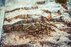 Spiny Lobster, shrimp fresh seafood market Thailand. Royalty Free Stock Images